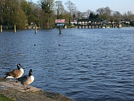 Shepperton - population: 10,796