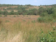 Chobham common, Chobham
