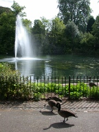 Geese and fountain, Ewell