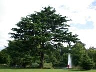 Tree, Ewell