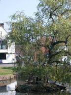 Horse pond, Godstone