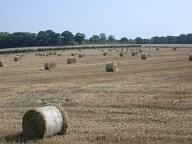 Field, Godstone
