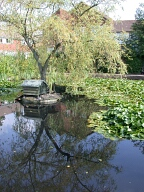 Pond, Lingfield