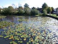 Pond, Chiddingfold