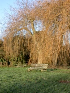Tree and bench, Abinger Hammer