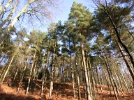 Leith Hill, Coldharbour