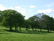 Trees, Runnymede, Egham