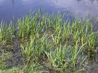 Pond, Runnymede, Egham