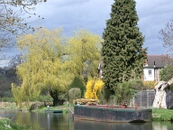 Barge and willow tree, Guildford