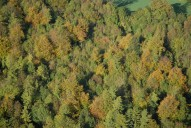 Aerial photograph of Trees north of Redhill