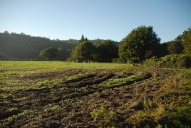 Field north of Box Hill and Westhumble railway station, Dorking