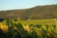 North Downs and Burford Bridge Hotel from Denbies Vineyard, Dorking