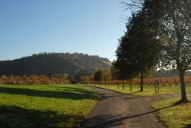 Denbies Vineyard and Box Hill, Dorking