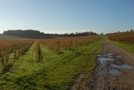 Denbies Vineyard, Dorking