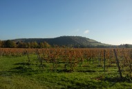 Box Hill from Denbies Vineyard, Dorking